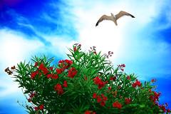 Birds Flying in The Sky Sky Flores Green Birds