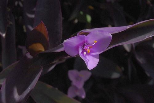 Flower-014