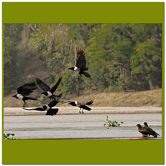 ballet (bit ramone) Tags: ballet bird pentax pájaros madagascar k20 áfrica águila bitramone
