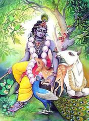 Krishna is the lover of all animals -  ISKCON desire tree (ISKCON Desire Tree) Tags: vishnu demon krishna garuda kidnap radha gopis rukmini chaitanya radhakrishna iskcon narasimha madhava bhumi govardhan bhima lordvaraha