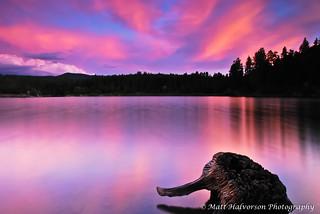 Stumped at Goldwater Lake