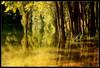 (gneri67) Tags: trees italy nature alberi canon landscapes italia wildlife natura paesaggi abruzzo marsica 40d mywinners platinumphoto eos40d canoneos40d theunforgettablepictures platinumheartaward artofimages gneri67 goldendiamondblog bestcapturesaoi giovannineri