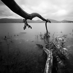 Fallen 2 (Samantha Nicol Art Photography) Tags: longexposure sky plants white motion black tree nature water grass clouds square bay scotland nikon branches hills nd samantha lochlomond nicol balmaha 10x milarrochy