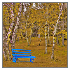 Yellow & Blue (Mr.GG) Tags: blue autumn tree yellow chair mongolia 1001nights mrgg canoneos5dmarkii ggmgl ganulzii