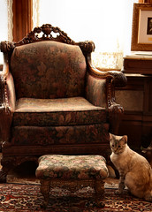 charm (Apryl's Canvas) Tags: light pet sun sunlight detail home window cat chair feline lace antique victorian charm fabric curtains rays armchair scroll footstool comfy