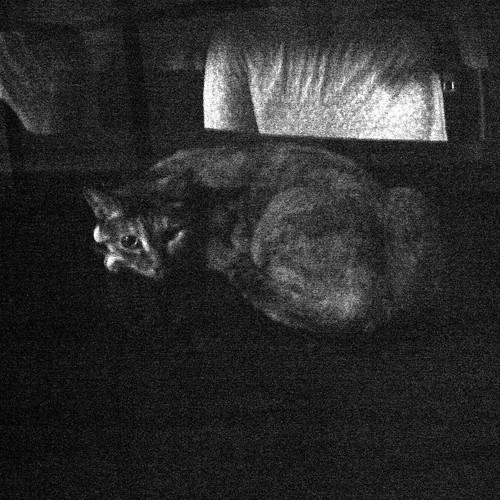 Today's Cat@20091001