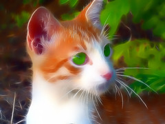 Pierino (*Sefora*) Tags: portrait italy painterly color eye art face animal cat photoshop catchycolors effects big artwork eyes italia arte top vibrant sony cara digitalart best fave occhi sharing fractal faves effect gatto gatti marche topaz effetti effetto supershot parigini abigfave anawesomeshot flickraward diamondclassphotographer flickrdiamond dscw80 dynamicphoto abigafe fractalius spiritofphotography colourvisions sharingart topazadjust novellaparigini flickrunitedaward dynamicphot effetts