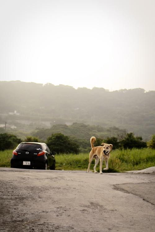 沖縄まゆげ犬