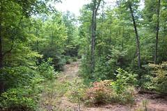 Catawba_0257 (southstarcommunities) Tags: tree brush cfp