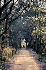 Nature Arch (Fabi Fliervoet) Tags: road holland nature lines forest landscape spring alone path stock thenetherlands hidden trail walkway mysterious lonely fabifliervoet