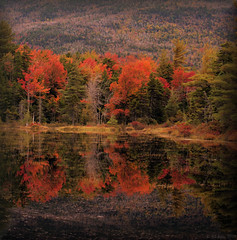 Fall Colors in New England (JA|Foto) Tags: blue autumn trees red sky plants mountain color reflection tree green fall nature water colors beautiful beauty grass leaves yellow contrast reflections amazing colorful skies open natural superb good fallcolors hill newengland newhampshire fallfoliage foliage brilliant magnificent engaging arresting topseven golddragon colorphotoaward rubyphotographer platinumpeaceaward