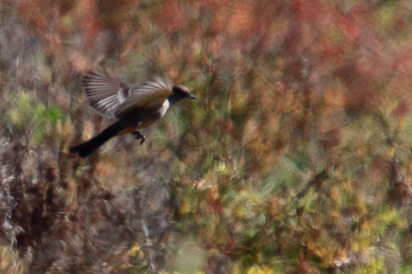 flyingBird