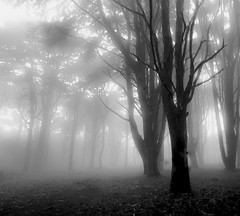 ~ the trees of my contentment (Teresa Teixeira) Tags: trees light mist nature forest sunrise blackwhite glow earth lisboa sintra peninha recoveredfile nikond90 teresateixeira deletedfile updatecollection ucreleased nikond90bw recovermyfiles