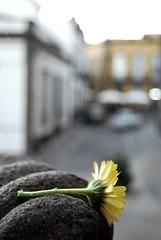 Melancolía (Mariano Rupérez) Tags: flowers flores flower flora flor melancolía telarañas