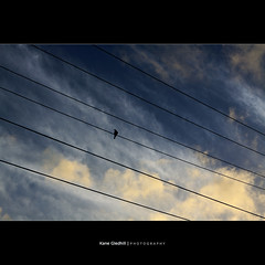 How do Birds Communicate. ([ Kane ]) Tags: bird nature clouds wire alone dusk qld kane simple gledhill 50d kanegledhill wwwhumanhabitscomau kanegledhillphotography