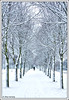Let it Snow...  (Explore) (Alex Verweij) Tags: morning trees 2 white snow cold canon walking bomen wandelen freezing explore lumiere wit almere 40d anawesomeshot dedoka alexverweij bestofmywinners 17dec2009