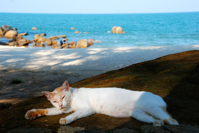 Malaysia - Kuantan - Teluk Cempedak