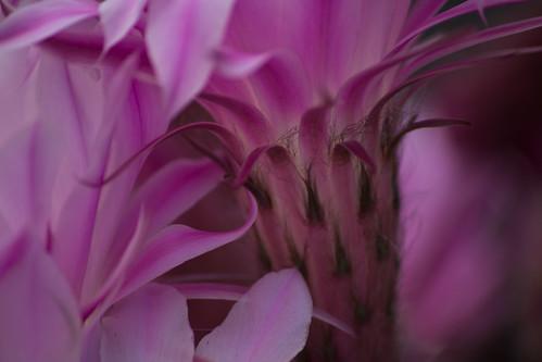 Thwaite Flower 2