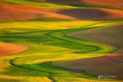 Palouse Curves (Chip Phillips) Tags: sunset orange green field yellow spring butte northwest wheat curves phillips hills pasture chip agriculture inland rolling palouse steptoe