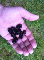Blackberry Snack