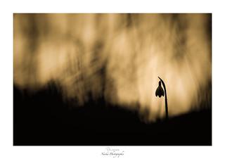 Solitude d'une veuve
