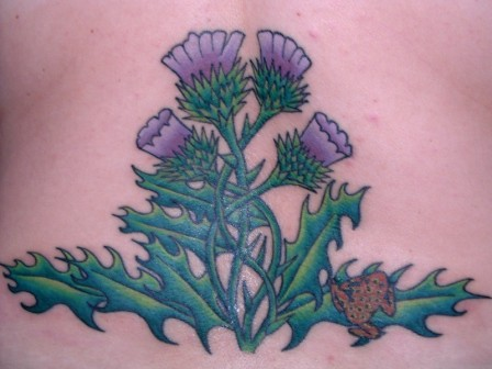 Finished - back thistle tattoo Here