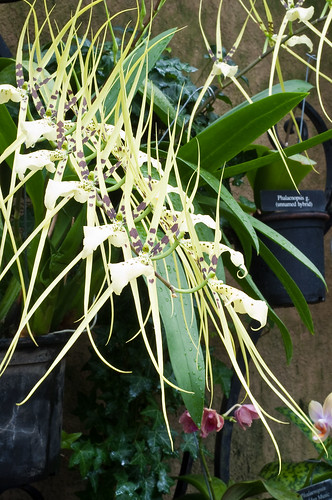 Orchids, Longwood Gardens
