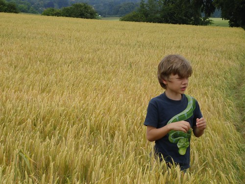Dane in a wheat field, June 09