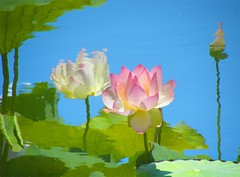 Lotus Reflection - Nature's Impressionist Art (Stanley Zimny (Thank You for 13 Million views)) Tags: pink blue flower reflection green art nature water garden waterlily lily lotus bronx ripples reflexions impressionist digitalcameraclub bronxbotanicalgarden abigfave colorphotoaward colourartaward thesuperbmasterpiece 100commentgroup