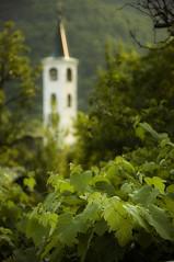 nature, men, god...and nature again (edoardo bartoccetti) Tags: man blur men nature vineyard focus bell god religion contest natura campanile piemonte dio uva grape 18105 uomini sfocato vigna d90