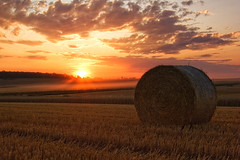 Bale Of Straw II (Philipp Klinger Photography) Tags: light sunset sky orange cloud sun tree nature field clouds rural forest germany landscape deutschland evening europe ray hessen wheat harvest straw panasonic rays hay dust bale philipp tress hesse fz50 badnauheim klinger platinumheartaward dcdead vanagram wisselsheim rbfeatured