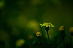 (- BOSS -) Tags: flower green       saoud   althani