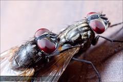 Flies In Love-150809140852