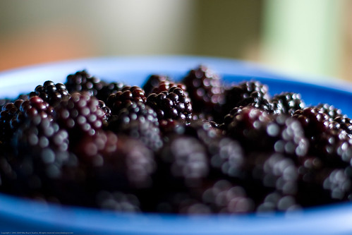 Canvolution: black berries