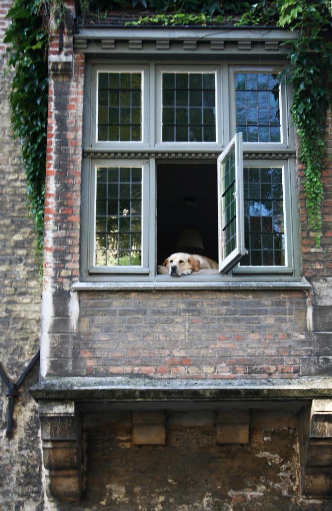 Dog watching the tourist boats