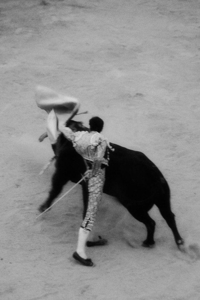 bull fight- BW 1