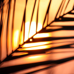 palmate sunrise (jenny downing) Tags: morning light sun abstract blur leaves silhouette sunrise circle gold dawn golden daylight early spain mediterranean angle bright bokeh echo orb blurred palm diagonal explore espana beginning palmtree round themed sunup daybreak matin blahblahblah morn vivaespana dwn newbeginning matins palmate breakofday explored sameoldsameold inspain firstblush jennypics jennydowning espanamixta atthecrackof photobyjennydowning
