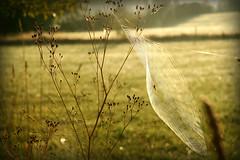web at sunrise (artistgal) Tags: sunrise dawn spider web hero winner ultrahero herowinner ultraherowinner