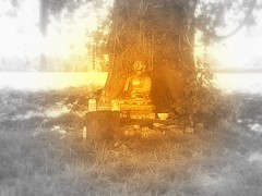 Buddhafield East tree shrine