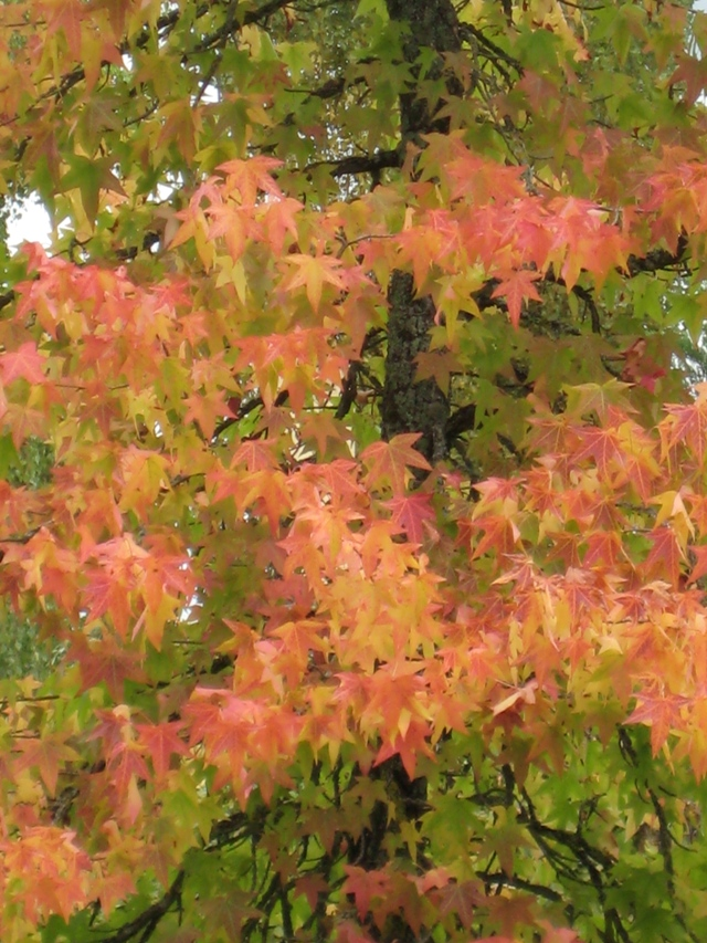 Fall (3)