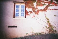 La vigne est partout by Holga (***Camille***) Tags: holga beaujolais maison mur vignes fenêtre nopostprocessing vignevierge holga135 lomographyfinecolor35mmfilm