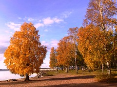 Fall at Lake Vänern in Sweden #1