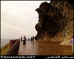 Al Mughsail (Shanfari.net) Tags: flowers plants nature al natural ericsson sony greenery cave oman salalah  sultanate dhofar  khareef  haq      taqah     governate  madeinat   darbat taiq c905 maghsail  raythut