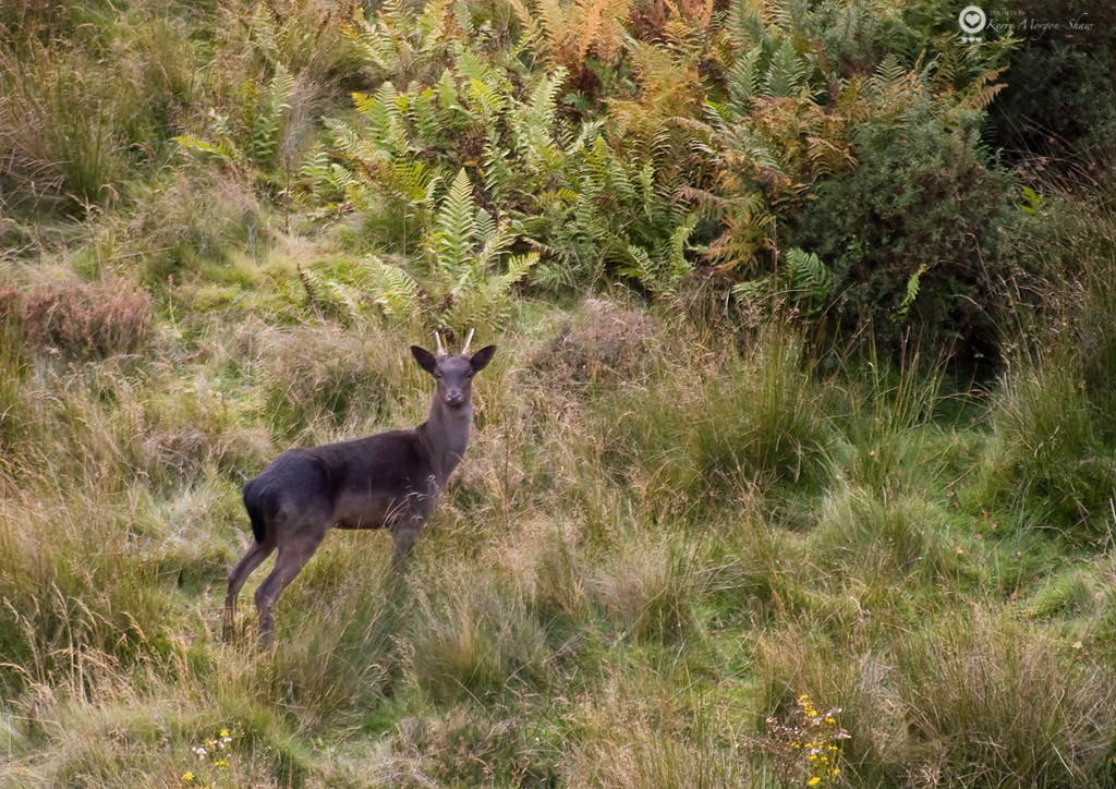Young stag in the quarry