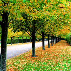 Regents Park at the beginning of Autumn (Andrea Kennard) Tags: park autumn london leaves avenue regentspark platinumheartaward