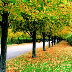 Regents Park at the beginning of Autumn (Andrea Kennard) Tags: park autumn london leaves avenue regentspark platinumheartaward