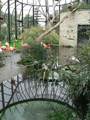 Ouwehands dierpark - Flamingo - 20090929 - 10 (Robbert Michel) Tags: september 2009 rhenen ouwehands