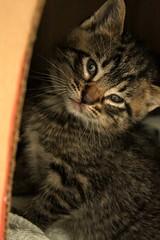 Mom & Kitties Call to Action