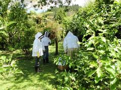 Les abeilles chez Rick et Jo