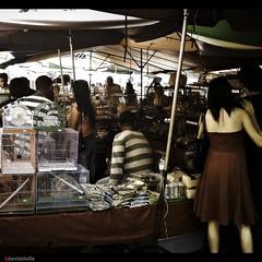 Pets stall at Gaya Street (1davidstella) Tags: cameraphone market sonyericsson cellphone malaysia mobilephone kotakinabalu bazaar sabah tamu gayastreet p1i 1davidstella